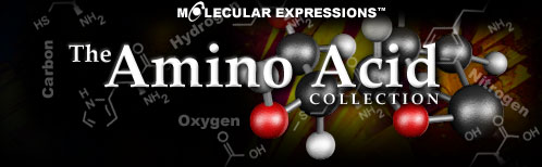The Amino Acid Collection
