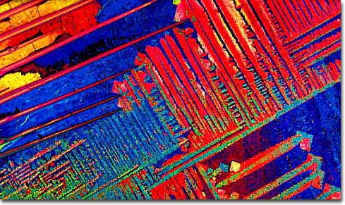 Photograph of Natural Light Beer under the microscope