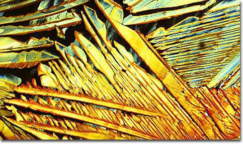 Photograph of Paulaner Munchen Oktoberfest Malt Liquor under the microscope