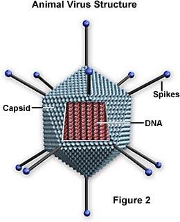 Ett schematiskt polyedriskt virus
