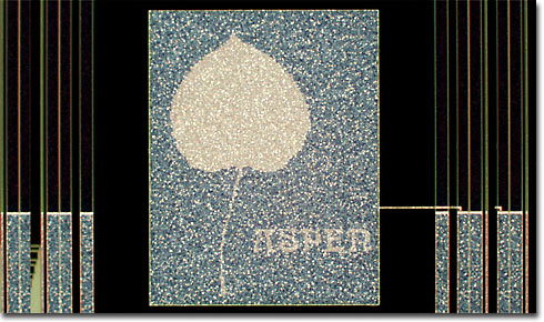 The Aspen Leaf (Darkfield)