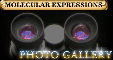Logo for Molecular Expressions