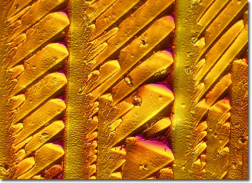 Photograph of saponin under the microscope