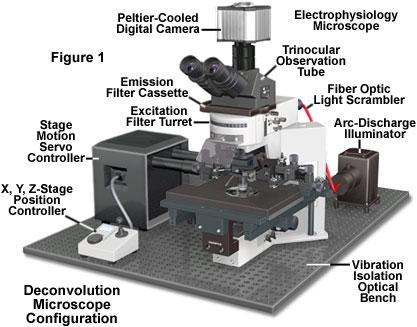 Molecular Expressions Microscopy Primer: Digital Image Processing ...