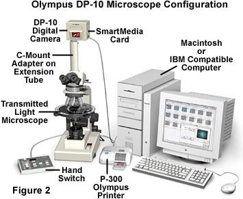Molecular expressions microscopy primer digital imaging in optical molecular expressions microscopy primer digital imaging in optical microscopy olympus dp 10 digital camera ccuart Choice Image