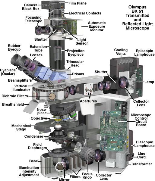 Molecular expressions microscopy primer microscope components olympus bx51 microscope cutaway diagram ccuart Gallery