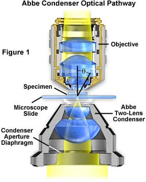 Molecular expressions microscopy primer anatomy of the microscope in this figure light from the microscope illumination source passes through the condenser aperture diaphragm located at the base of the condenser ccuart Choice Image