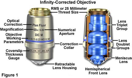 Molecular expressions microscopy primer anatomy of the microscope contrast dic prisms polarizers and epi fluorescence illuminators into the parallel optical path between the objective and the tube lens with ccuart Image collections