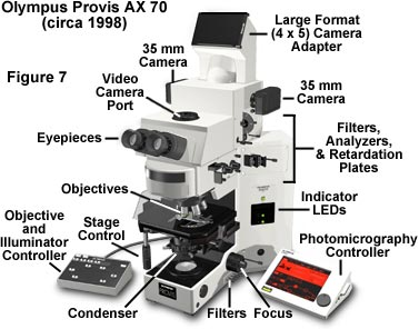 an introduction to the analysis of the microscope Analysis scanning electron m0 0 icroscopy: an introduction k d vernon-parry, centre for electronic materials, umist in this article, aimed at the non-specialist microscopist rather than the experienced user, we introduce the fundamentals of scanning electron microscopy and the information that can be gained from this technique.
