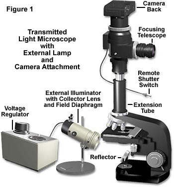 Molecular Expressions Microscopy Primer Anatomy Of The Microscope