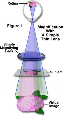how to get magnification of microscope