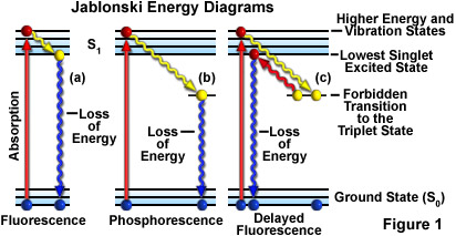 Molecular Expressions Microscopy Primer: Fluorescence - Jablonski ...