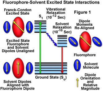 Molecular expressions microscopy primer fluorescence solvent molecular expressions microscopy primer fluorescence solvent effects on fluorescence emission interactive java tutorial ccuart Gallery