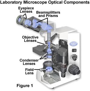 Molecular Expressions Microscopy Primer Physics Of Light