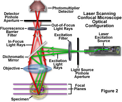 Molecular Expressions Microscopy Primer Specialized