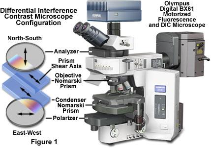 olympus optical microscope