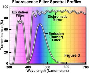 Molecular Expressions Microscopy Primer: Specialized Microscopy Techniques - Fluorescence ...