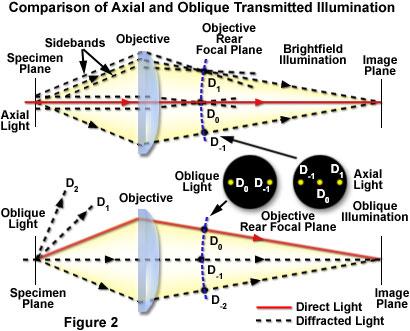 how to use a molecular light microscope