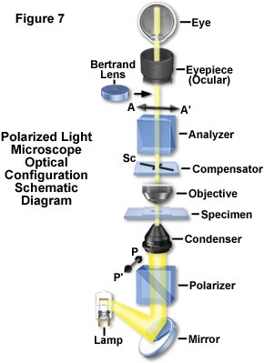 reviewing the conventional polarizing microscope as illustrated in the  schematic drawing presented in figure 7, the polarizer is commonly oriented  with its