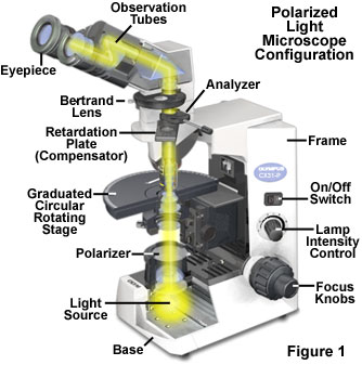 Molecular expressions microscopy primer specialized microscopy the basic optical and mechanical components of a polarized light microscope are illustrated in figure 1 at a minimum these microscopes must be equipped ccuart Choice Image